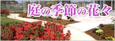 庭の季節の花々